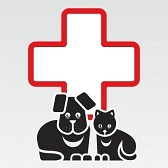 cat and dog first aid lessons