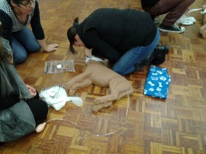 Hertfordshire canine first aid courses