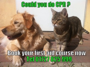 cat and dog first aid course