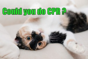 CPR lessons on a cat