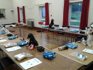 canine first aid courses