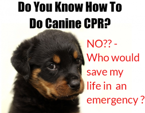 CPR on a dog