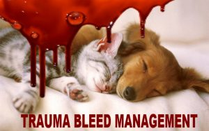 Trauma bleed management cat and dog first aid