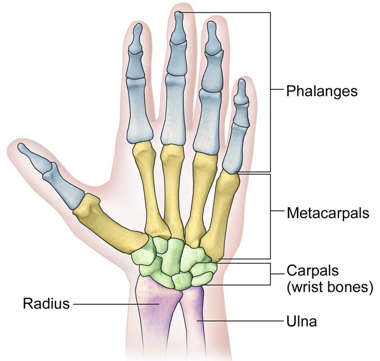 First aid broken finger